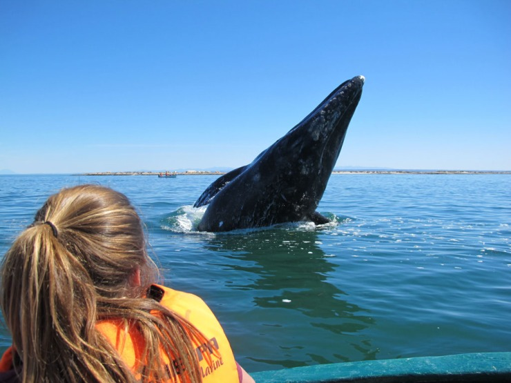Belyn and breaching baby whale