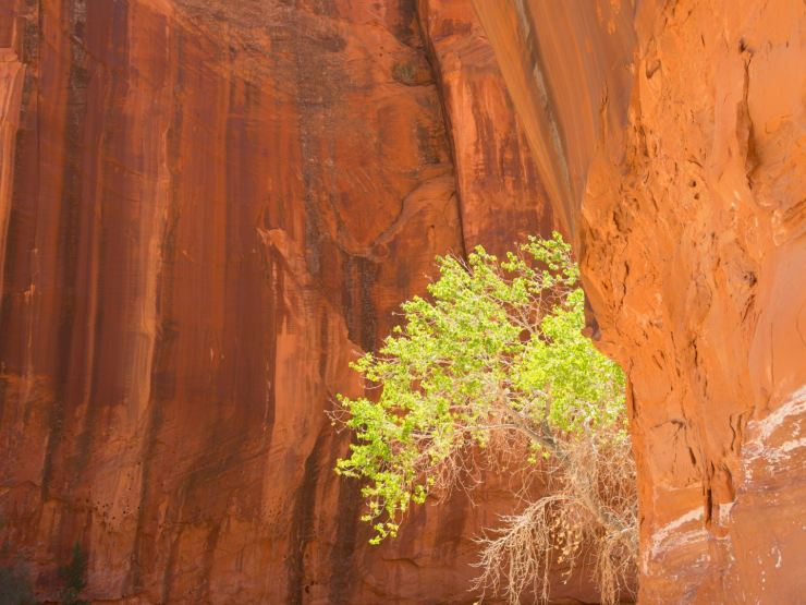 Canyon and Tree