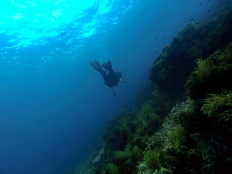 Avalon Dive Park
