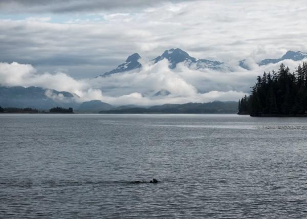 Otter bay (Large)