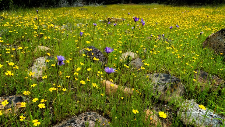 Flowers 169-1 (Large)